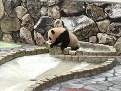 20170220_panda