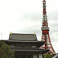 増上寺02
