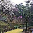 65_仙巌園