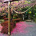 70_仙巌園