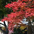 2016年11月4日 松本城