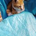 長崎1日目 猫