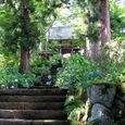 高源院(紫陽花寺)1